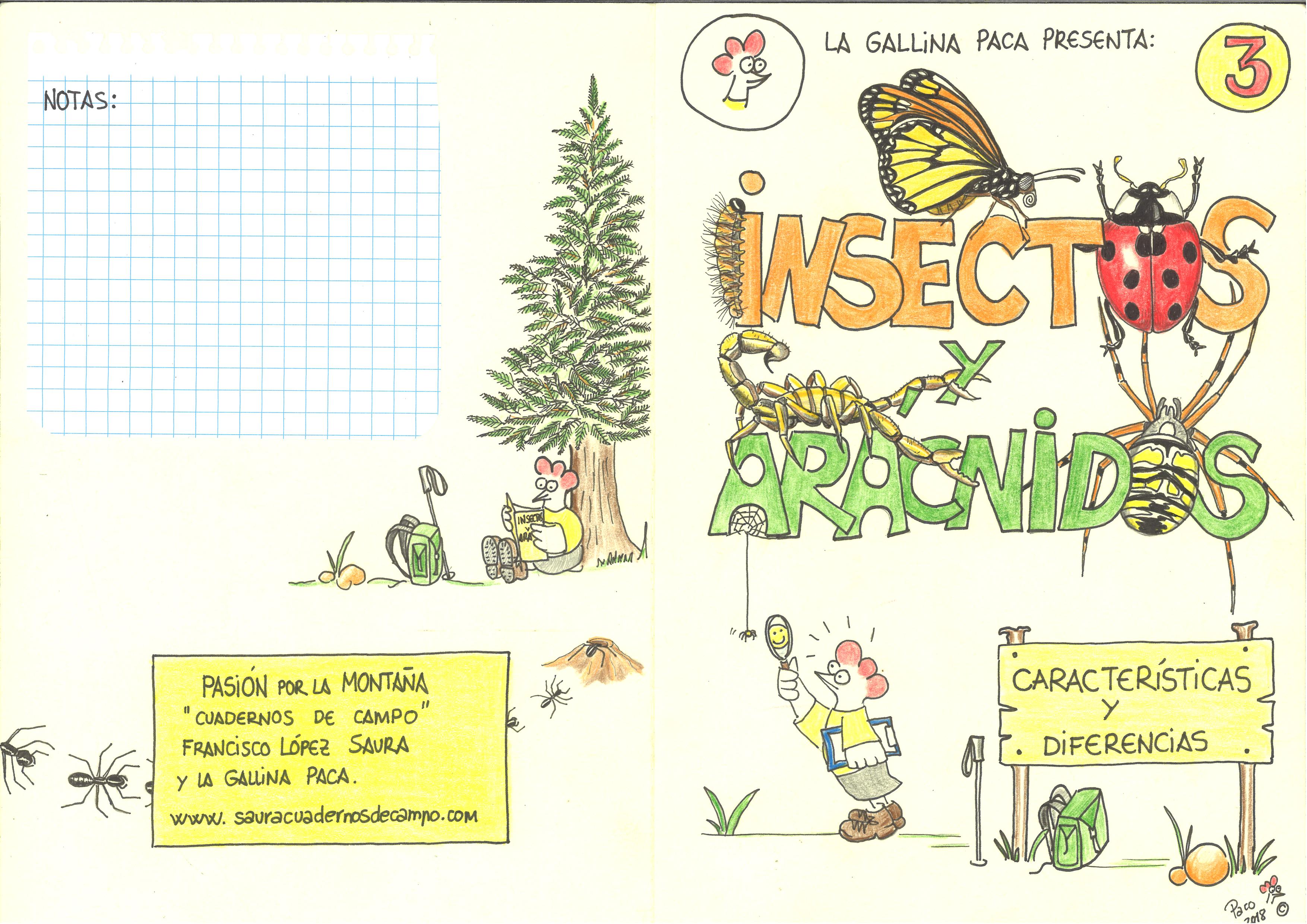 3-Insectos y Arácnidos (exterior)