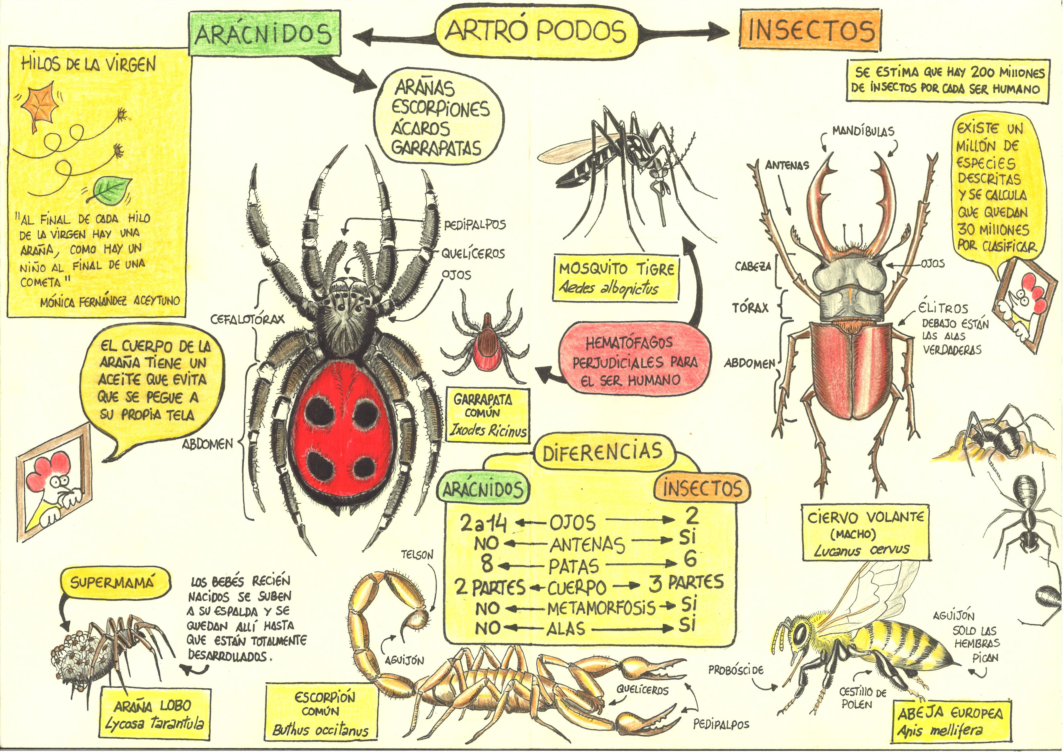 3-Insectos y Arácnidos (interior).