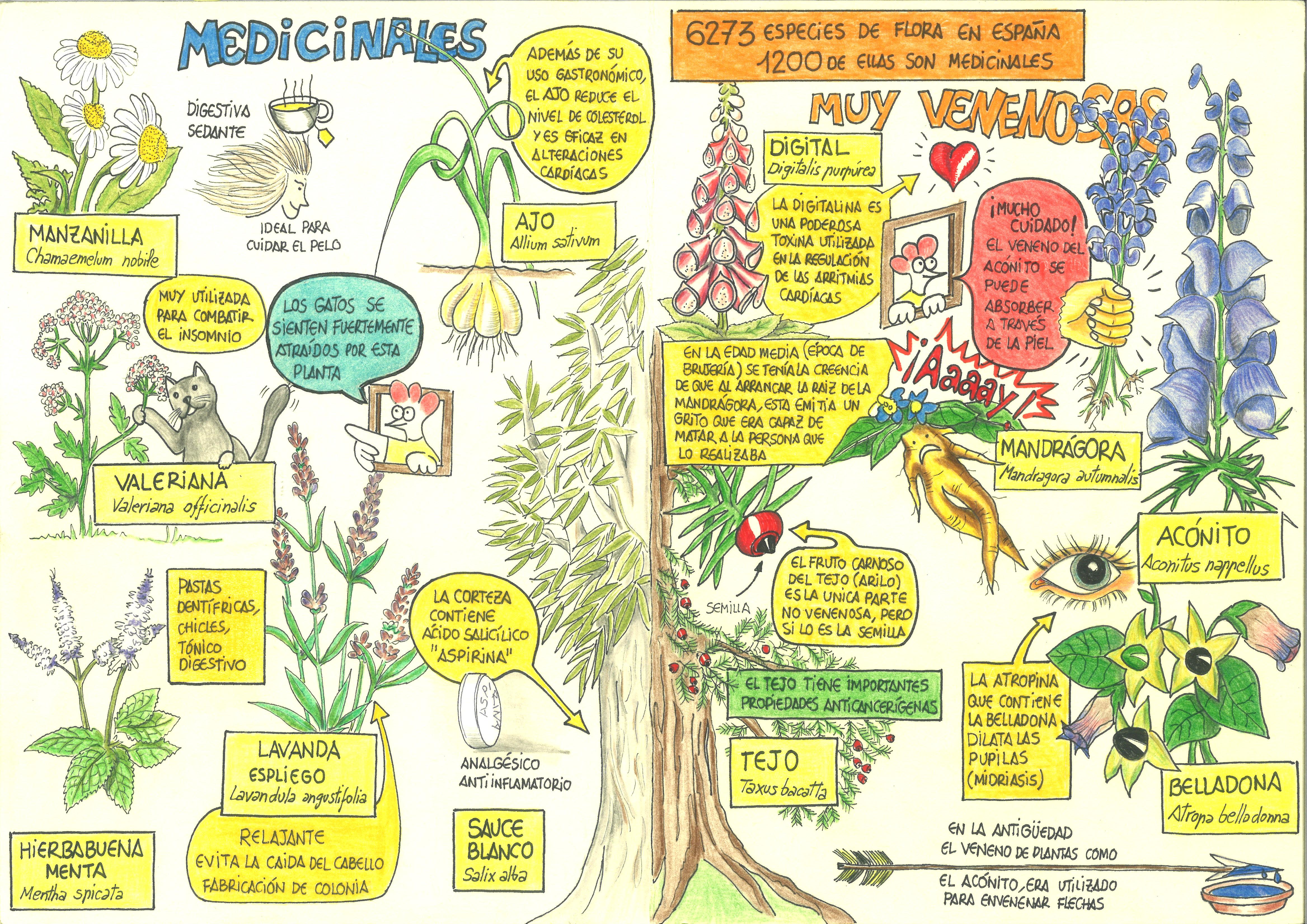 4- Plantas Venenosas y medicinales. (Interior)