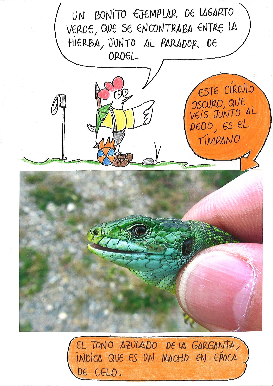 7-Lagarto Verde b